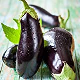 David's Garden Seeds Eggplant Black Beauty SL2470 (Black) 50 Non-GMO, Heirloom Seeds Photo, new 2020, best price $6.95 review