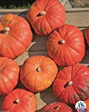 Cinderella's Carriage F1 Pumpkin 15 Seed Aas Winner 25-35 Lbs Have 5-7 Per Plant Photo, new 2019, best price $4.85 review