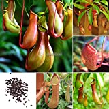 Portal Cool Pack 50Pcs: 20/50Pcs Garden Balcony Plants Eating Mosquito Nepenthes Flower Seeds WST Photo, new 2019, best price $9.99 review