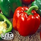 Keystone Resistant Sweet Bell Pepper Seeds 150 SEEDS NON-GMO Photo, new 2019, best price $1.85 review