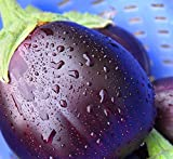 Black Beauty Eggplant Seeds- Heirloom- 100+ Seeds Photo, new 2018, best price $2.37 review