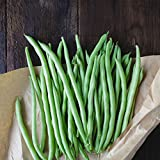 Blue Lake Bush Bean 274 Seeds - 1 Lbs - Treated, Non-GMO, Heirloom, Open Pollinated - Vegetable Garden Seeds - Green String Beans Photo, new 2019, best price $9.76 review