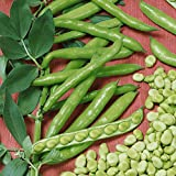 Everwilde Farms - 40 Fava Broad Windsor Fava Bean Seeds - Gold Vault Jumbo Seed Packet Photo, new 2018, best price $3.00 review