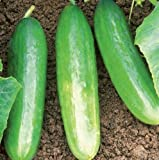 Organic Diva Cucumber Seeds - 30 Seeds Per Packet Photo, new 2017, best price $5.49 review