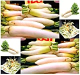 Japanese Daikon Daikon Radish Seeds - Japanese Radish FRESH SEEDS - Fast Growth ONLY 40 - 50 Days to Harvest - MAKES EXCELLENT RADISH SALAD - By MySeeds.Co (00050 Seeds - 50 Seeds - Pkt Size) Photo, new 2018, best price $2.53 review