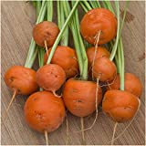 Package of 800 Seeds, Paris Market Carrot (Daucus carota) Non-GMO Seeds by Seed Needs Photo, new 2018, best price $3.50 review