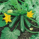 Kings Seeds - Courgette Early Gem F1 - 15 Seeds Photo, new 2018, best price $1.36 review