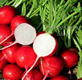 SEED TAPE 5 METERS - RADISH Cherry 250 seeds - Raphanus sativus vegetable Photo, new 2018, best price $10.00 review