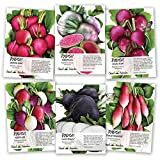 Multicolor Radish Seed Packet Collection (6 Individual Packets) Non-GMO Seeds by Seed Needs Photo, new 2018, best price $12.50 review
