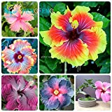 On Sale!!! 200pcs Hibiscus Seeds 24kinds Hibiscus Rosa-sinensis Flower Seeds Hibiscus Tree Seeds for Flower Potted Plants Photo, new 2018, best price $1.39 review