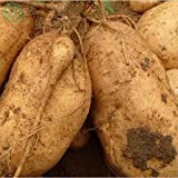 Brand New! Vegetable seeds Sweet potatoes Sweet Potato, Batata Mameya by Prorganics Farm garden 20pcs seeds of hope Photo, new 2019, best price $1.90 review