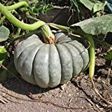 Pumpkin Blue Seeds Giant Rare Queensland Vegetable for Planting Giant Non GMO 5 Seeds Photo, new 2019, best price $6.98 review