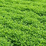 Garden Cover Crop Mix Seeds - Blend of Gardening Cover Crop Seeds: Hairy Vetch, Winter Peas, Forage Collards, Winter Rye, Crimson Clover, More (1 Lb Pouch) Photo, new 2018, best price $11.95 review
