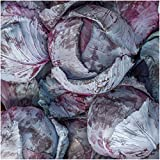 Package of 300 Seeds, Mammoth Red Rock Cabbage (Brassica oleracea) Non-GMO Seeds By Seed Needs Photo, new 2018, best price $3.50 review