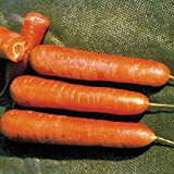 Park Seed Nantes Organic Carrot Seeds Photo, new 2019, best price $4.95 review
