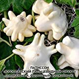 Rare Squash Zucchini seeds Yugoslav Vegetable Seed from Ukraine Photo, new 2019, best price $1.99 review