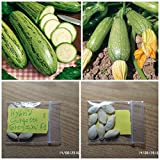 Courgette ''Greyzini F1'' HYBRID ~8 Top Quality Seeds - Very Productive - Early Photo, new 2018, best price $11.00 review