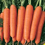 Everwilde Farms - 2000 Scarlet Nantes Carrot Seeds - Gold Vault Jumbo Seed Packet Photo, new 2018, best price $2.50 review