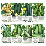 Seed Needs, Cucumber Seed Collection (8 Individual Packets) Non-GMO Photo, new 2019, best price $12.50 review