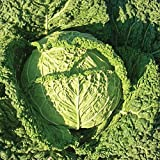 Famosa F1 Hybrid Cabbage Seeds - Flavor displays well fresh or cooked. !!!!(25 - Seeds) Photo, new 2020, best price $2.42 review