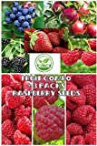 Fruit Combo Pack Raspberry, Blackberry, Blueberry, Strawberry, Apple (Organic) 975+ Seeds UPC 600188190564 & 3 Free Packs of Raspberry Seeds Photo, new 2018, best price $8.12 review