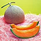 December01 &Yubari King Melon 10 Seeds Photo, new 2018, best price $2.00 review