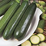 Courgette - All Green Bush - 25 Seeds Photo, new 2018, best price $1.39 review