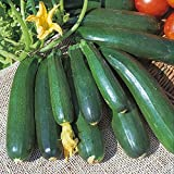 Kings Seeds - Courgette Zucchini - 20 Seeds Photo, new 2018, best price $1.63 review