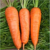 Package of 800 Seeds, Royal Chantenay Carrot (Daucus carota) Non-GMO Seeds by Seed Needs Photo, new 2018, best price $3.50 review