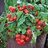 David's Garden Seeds Tomato Currant Tiny Tim OS961G (Red) 50 Heirloom Seeds Photo, new 2018, best price $8.45 review