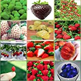 New 12 Packs Different Strawberry Seeds Photo, new 2019, best price $7.98 review