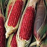 Burpee Ruby Queen Sweet Corn Seeds 200 seeds Photo, new 2018, best price $9.39 review
