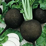 Everwilde Farms - 500 Black Spanish Round Radish Seeds - Gold Vault Jumbo Seed Packet Photo, new 2018, best price $2.50 review