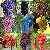 500 grape seeds, all without transgene,panago Photo, new 2018, best price $9.97 review