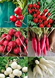 David's Garden Seeds Collection Set Radish RSL135 (Multi) 6 Varieties 2000 Plus Seeds (Open Pollinated, Heirloom, Organic) Photo, new 2018, best price $17.95 review