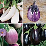 Burpee Gourmet Blend Eggplant Seeds 50 seeds Photo, new 2019, best price $7.69 review