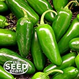 Jalapeno M Pepper Seeds - 200 Seeds NON-GMO Photo, new 2019, best price $1.95 review