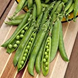 David's Garden Seeds Pea Green Arrow SL2040 (Green) 100 Non-GMO, Organic, Heirloom Seeds Photo, new 2019, best price $6.95 review