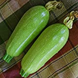 Kings Seeds - Courgette Clarion F1 (Lebanese Type) - 15 Seeds Photo, new 2018, best price $1.84 review