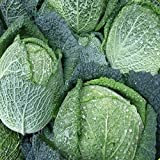 Everwilde Farms - 500 Savoy Cabbage Seeds - Gold Vault Jumbo Seed Packet Photo, new 2018, best price $2.50 review