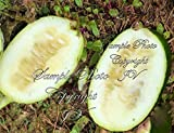 Rare Seeds! Cucumeropsis mannii Egusi-itoo African Melon 10 Seed is used for Oil Photo, new 2018, best price $13.99 review