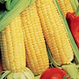 Park Seed Sugar Buns Hybrid Corn Seeds Photo, new 2019, best price $5.95 review