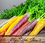 BIG PACK x Organic Rainbow Mix Carrot (1,000+) Seeds - Atomic Red, Bambino Orange, Cosmic Purple, Lunar White and Solar Yellow - By MySeeds.Co Photo, new 2018, best price $10.95 review