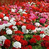 Outsidepride Geranium Flower Seed Plant Mix - 100 Seeds Photo, new 2019, best price $6.49 review