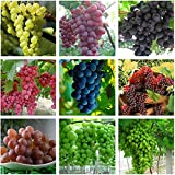 Best Garden Seeds Heirloom Mixed 9 Types of Grape Seeds, 30 Seeds, Professional Pack, tasty dense juicy fruits Photo, new 2020, best price $13.05 review