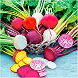 Package of 600 Seeds, Rainbow Mixed Beets (Beta vulgaris) Non-GMO Seeds By Seed Needs Photo, new 2018, best price $3.65 review