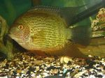 Severum Photo and care