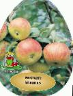 Photo Apples grade Orlovim