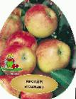 Photo Apples grade Svezhest